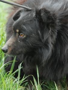 Dżekuś (16)